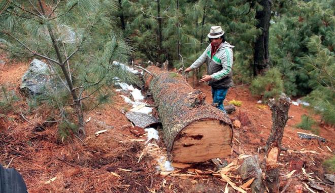 Foto: Vor să oprească tăierile ilegale.  Pază gratuită pentru pădurile private
