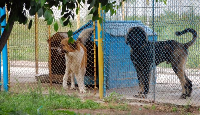 Foto: Târg de adopţie a câinilor comunitari, la Mangalia