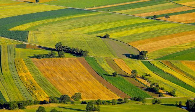 Foto: Daea: Străinii nu dețin 40% din terenurile agricole, legislația va fi modificată