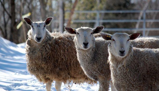 Termen limită pentru crescătorii de animale - termenlimita-1610128668.jpg