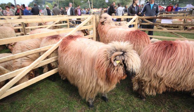 Foto: Teste gratuite pentru scrapie la ovine și caprine