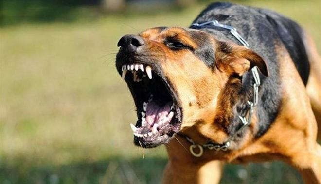 Foto: Dosar penal pe numele proprietarei câinilor care au atacat şi mutilat trei persoane