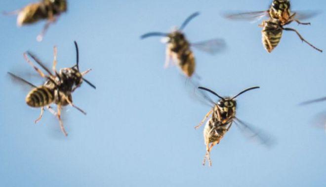 Foto: 18 răniţi, în urma unui atac al unui roi de viespi