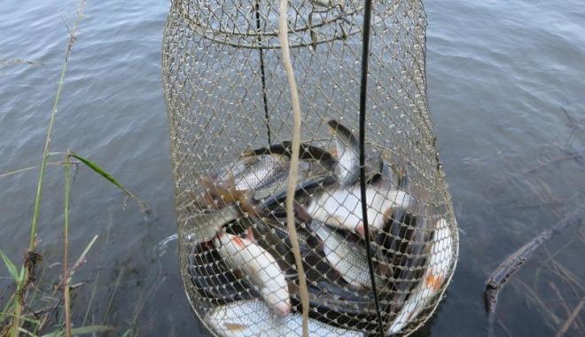 Foto: Tone de peşte pescuite ilegal, confiscate de poliţişti