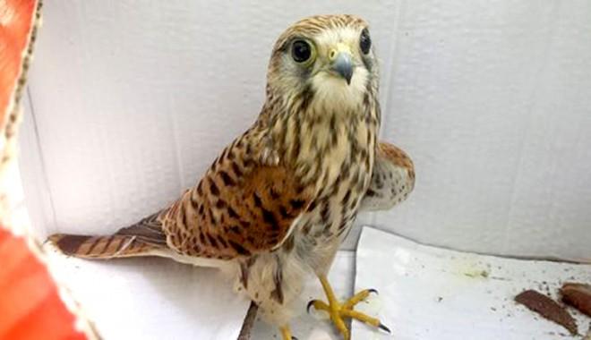 Tratament şi adăpost pentru păsările sălbatice bolnave - tratamentsiadapost1-1407263440.jpg