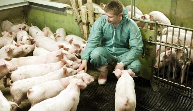Foto: UE negociază cu Rusia reluarea exportului cărnii de porc