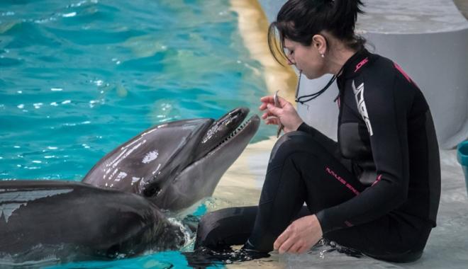 """Foto: Din toamnă, delfinoterapie! """"Nu puteam să dăm delfinii pe mâna oricui"""""""