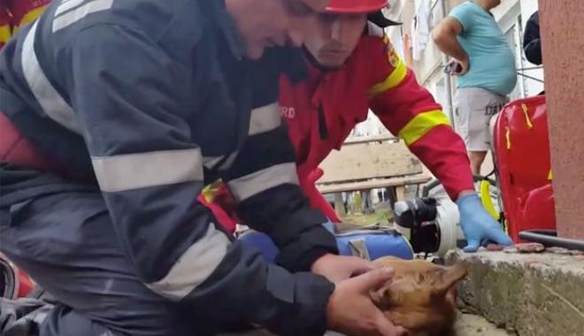 Foto: IMAGINI VIDEO EMOŢIONANTE / Pompier român, erou în presa franceză: A resuscitat un câine, prin respiraţie gură la gură