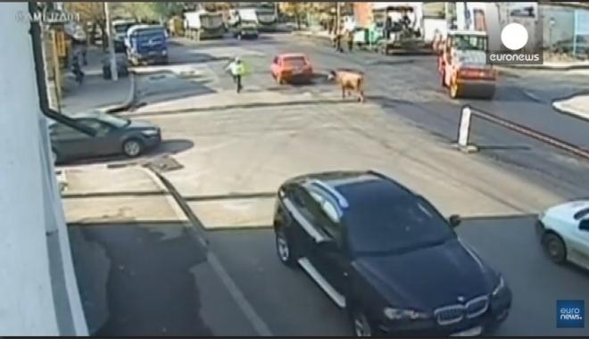 Foto: VIDEO. De-a râsu' plânsu' / Poliţist atacat în intersecţie de ...un taur