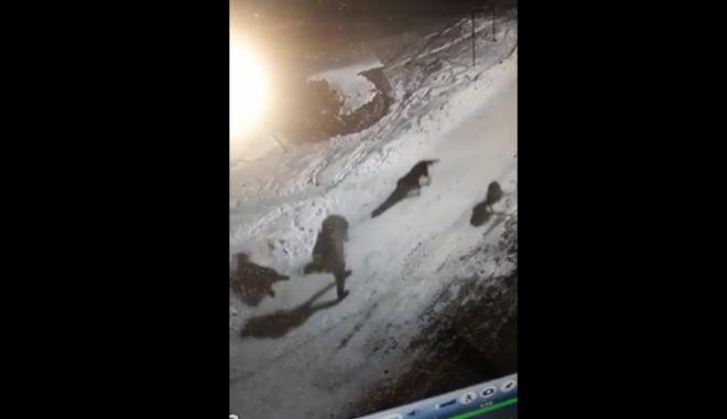 Foto: ATENŢIE, SCENE TERIBILE! Femeie atacată de câini în fața blocului - VIDEO