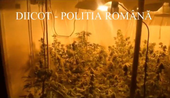 Foto: VIDEO. Creştea cannabis în apartament, la Constanţa