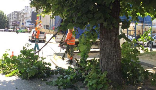 Foto: Continuă toaletarea arborilor care încurcă vizibilitatea semnelor de circulație