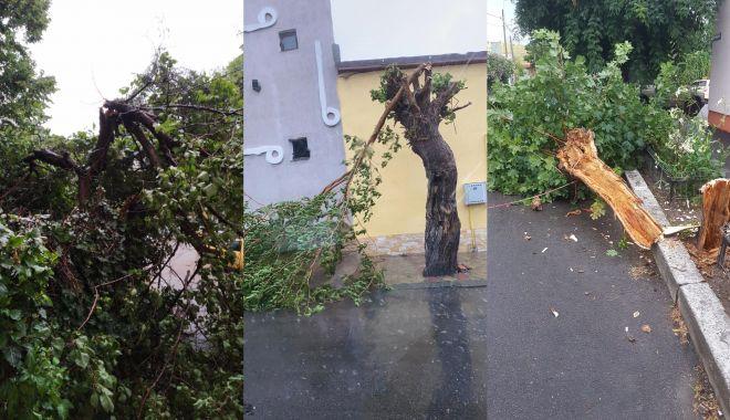 Foto: Ploaia face ravagii la Constanța. Copaci căzuți și inundații în tot județul