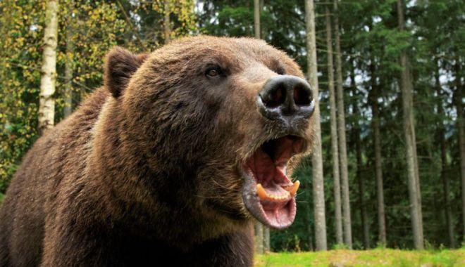 Foto: Un cioban atacat de urs a fost găsit mort. Animalul i-a mâncat o mână