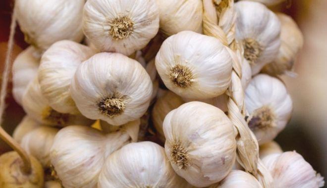 Foto: 299 fermieri solicită ajutor de minimis pentru producția de usturoi