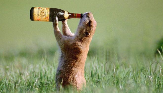 Foto: Vai ce rău îs la beţie!