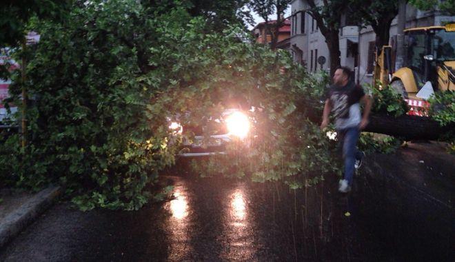 """Foto: """"Am văzut moartea cu ochii!"""" Copac doborât de furtună, căzut peste o maşină"""