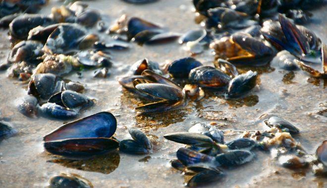 Foto: Vă plac midiile? Puteţi urma un curs de instruire privind acvacultura midiilor