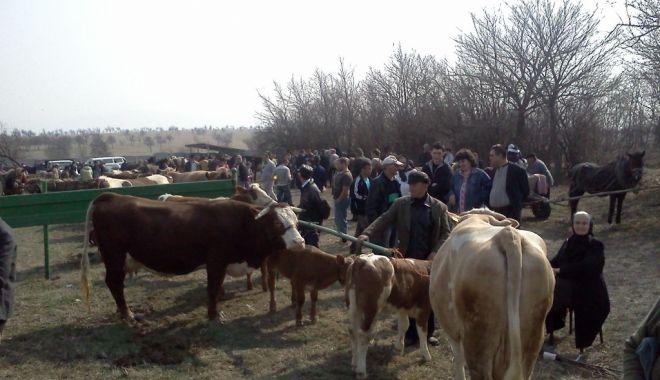 Veste bună pentru fermieri. De luna viitoare se redeschid târgurile de animale - vestebuna-1624033402.jpg