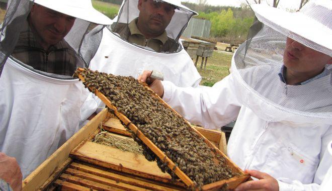 Foto: Veste bună pentru apicultori: a fost prelungit termenul de depunere a documentelor justificative!