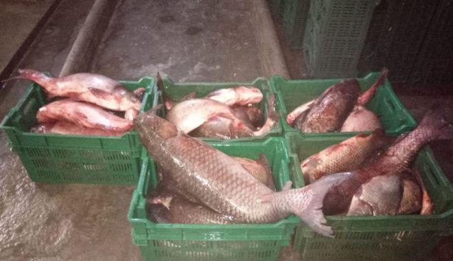 Foto: Vindea pește fără documente legale. Ce au făcut polițiștii