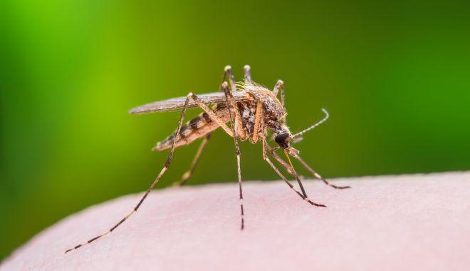Virusul transmis de ţânţari, încă prezent. Două decese, la Constanţa - virusulwestnile-1538293249.jpg