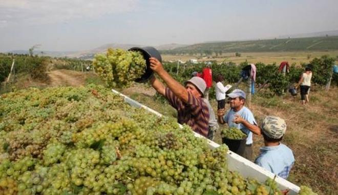 Foto: Viticultorii pot depune cererile  de plată până pe 30 noiembrie