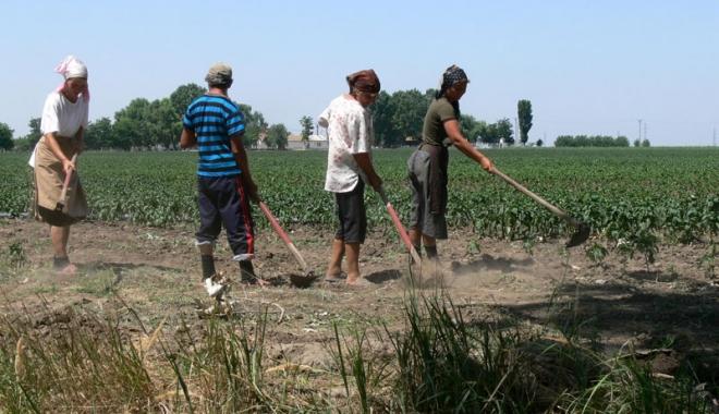 Foto: Se înfiinţează agenţiile de mediere între cererea şi oferta de muncă zilieră