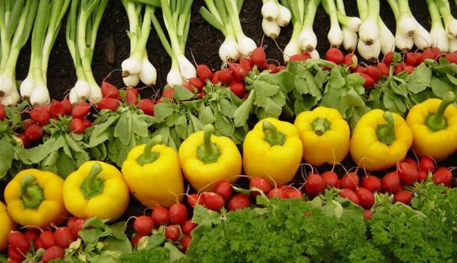 Foto: Vreţi să învăţaţi cum se face agricultură ecologică?