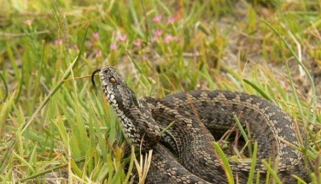 Foto: Români atacaţi de şerpi! Vezi cum trebuie să acorzi primul ajutor în caz de muşcătură