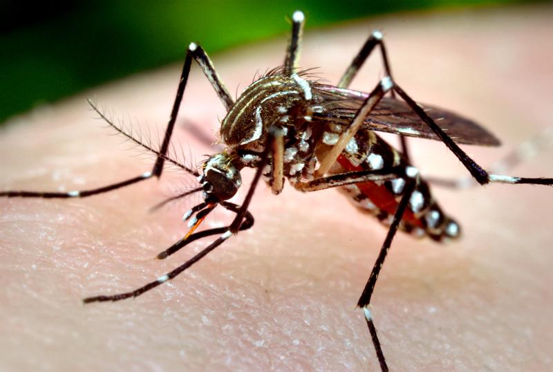 Foto: Ţineţi ţânţarii la distanţă!  Ei ne pot infecta cu virusul West Nile