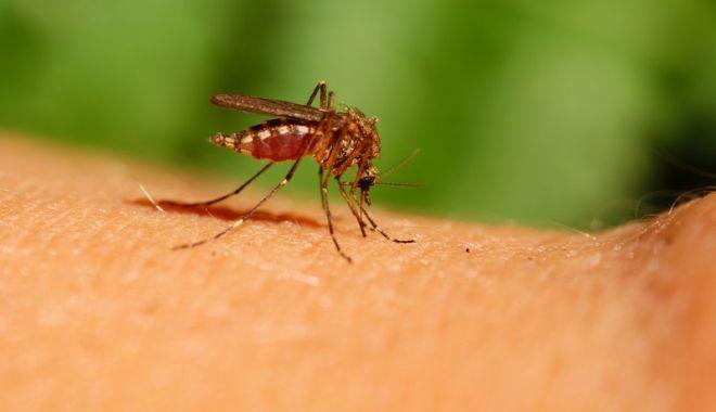 Şase persoane, infectate în ultima săptămână cu virusul West Nile