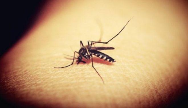 Foto: ESTE ALERTĂ! Încă un deces cauzat de virusul West Nile