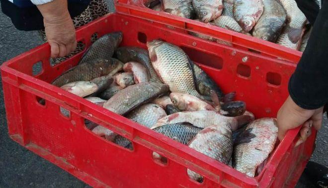 Tras la răspundere, după ce a fost prins cu pește la vânzare, pe stradă - whatsappimage20181029at0728221-1540810473.jpg