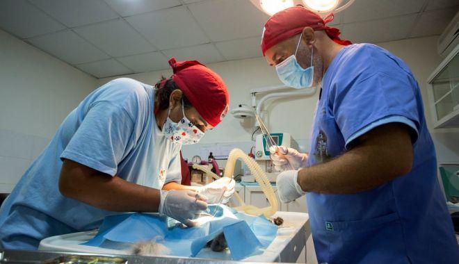 A început a doua campanie de sterilizare gratuită a animalelor de rasă comună din municipiul Constanţa - whatsappimage20200818at181737153-1624465705.jpg