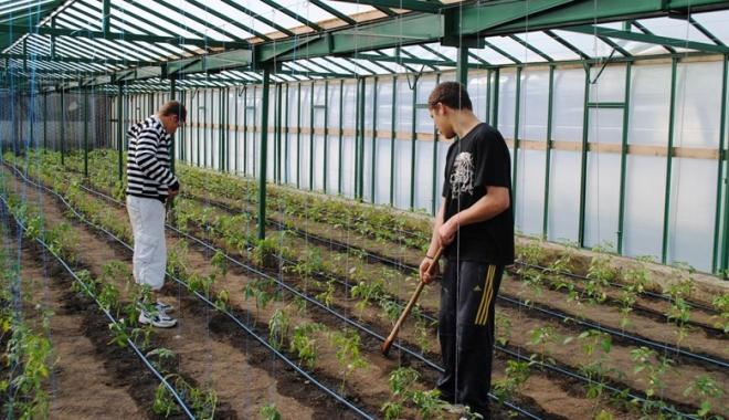 Minori angajaţi pe post de zilieri pe câmp - zilieriminori-1505661604.jpg