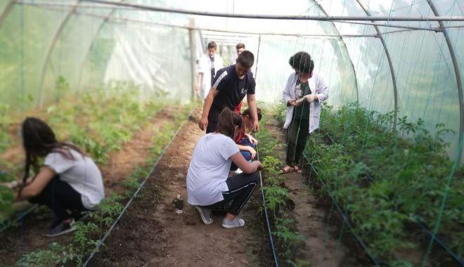 Foto: Ziua Mondială a Mediului, marcată de elevii Liceului Agricol Poarta Albă