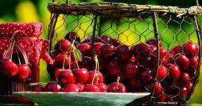 Cireșele, o excelentă sursă de sănătate