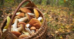 Ciupercile protejează funcțiile cognitive și susțin memoria