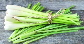 Lemongrass-ul echilibrează nivelul de colesterol din sânge