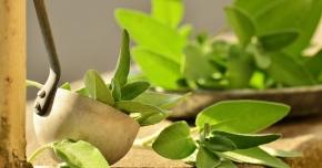 Ceaiul de salvie poate fi folosit pentru tratarea afecţiunilor respiratorii