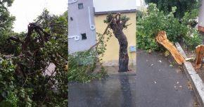 Ploaia face ravagii la Constanţa. Copaci căzuţi şi inundaţii în tot judeţul