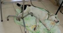 Povestea sfâşietoare a căţelului care a murit de tristeţe după ce a fost abandonat pe un aeroport