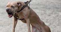 Copil ucis de câine / Ce decizie au luat autorităţile