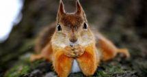 CAZ ŞOCANT! Un bărbat a murit după ce a mâncat creier de veveriţă
