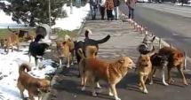 Femeie mușcată de 15 câini, la marginea oraşului