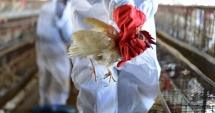 Zeci de cazuri de gripă aviară, la Constanţa