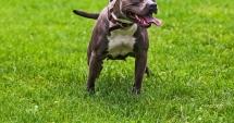 Amenzi usturătoare pentru posesorii de câini de luptă şi de atac. Ce rase de câini trebuie declarate la poliţie