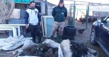 Peste 200 kg de peşte, confiscate de poliţiştii de frontieră