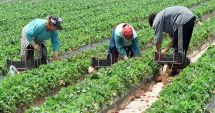 VREŢI SĂ MUNCIŢI ÎN STRĂINĂTATE? Se caută culegători de fructe în Spania